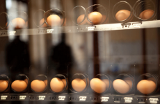 Frech Egg Vendig machine, Thierry Boutonnier.